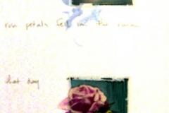 Polaroid image transfer Rose petals fell