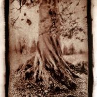 Gumoil Swirled Cotswold Tree