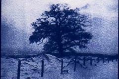 Cyanotype Tree in winter