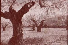 Salt print Cherry blossom