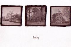 Salt print Spring at Kew