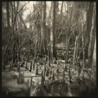 Ziatype Cypress Glade