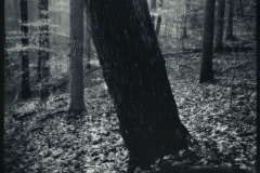 Cyanotype over ZIatype Winter Solstice