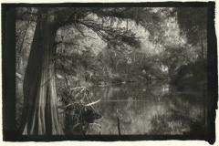 Ziatype Suwannee River Cypress