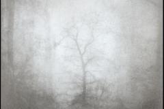 Bromoil Misty Tree