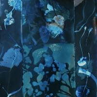 1-Cyanotype-and-Vandyke-Unititled-Collage