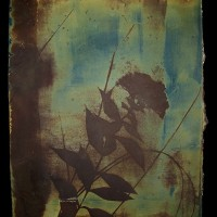 1-Cyanotype-and-Vandyke-Unititled-Silhouette