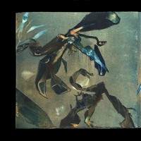 6a-Cyanotype-Vandyke-Out-Beyond
