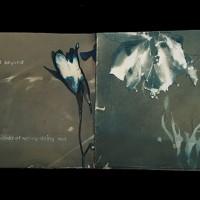 6b-Cyanotype-Vandyke-Out-Beyond