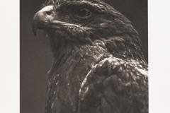 Platinum palladium BlackBirds#1