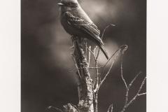Platinum palladium BlackBirds#2
