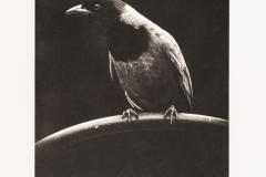 Platinum palladium BlackBirds#4