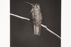 Platinum palladium BlackBirds#5