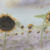 Handpainted infrared Ghostly Sunflowers