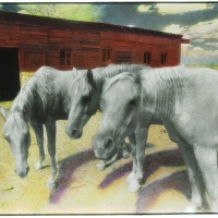 Handpainted infrared Horse Trio