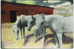 Handpainted infrared Horse Trio