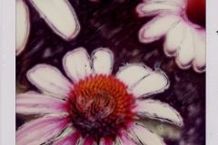 Polaroid SX-70 Cone Flower 3