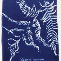 Cyanotype Cynthea Australis