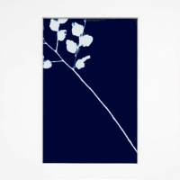Cyanotype Triptych Forest lace
