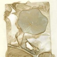 Mordancage-Leaf-veiling