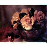 Polaroid transfer Juliet rose