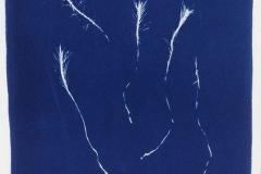 Cyanotype Dawsonia superba