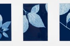 Cyanotype Triptych Moon Song