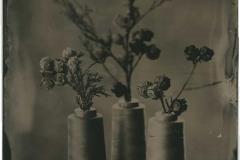 Tintype Cypress