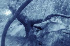 Pinhole cyanotype Central park