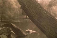Pinhole kallitype Tree