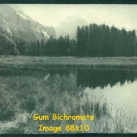 Gum bichromate Yosemite meadow