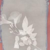 Lumen print 05