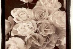 Satista Rose 1