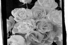 Satista - gold toned Rose 1