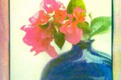 Tri coloured gum Bougenvilla 1