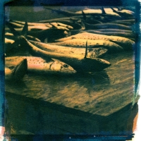 Tri-color Gum over Cyanotype CatchOfTheDay