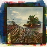 Tri-color Gum over Cyanotype Roots