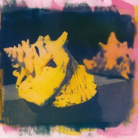 Tri-color Gum over Cyanotype Shell1
