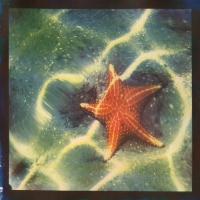 Tri-color Gum over Cyanotype Starfish
