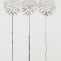 Platinum-three-dahlias