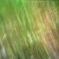 Pinhole Green