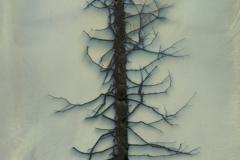 Chromoskedasic sabattier Tree