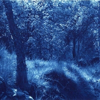 Cyanotype Glade, Stanton in the Peak