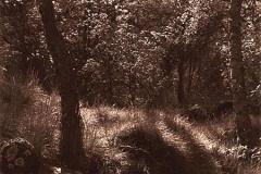 Argyrotype Glade, Stanton in the Peak