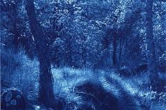 Cyanotype Glade, Stanton in the Peak