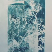 Cyanotype Over Shadowed