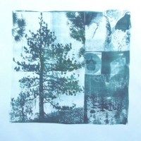 Cyanotype Shadows Shelter