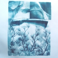Cyanotype Tree Top