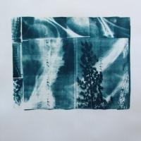 Cyanotype Wind Swept
