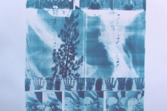 Cyanotype Into The Wind